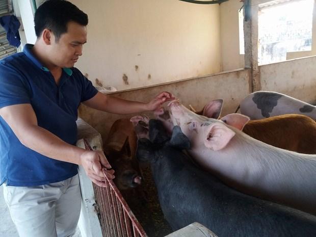 """""""Cazar"""" cerdos negros en ocasion del Ano Nuevo Lunar hinh anh 3"""