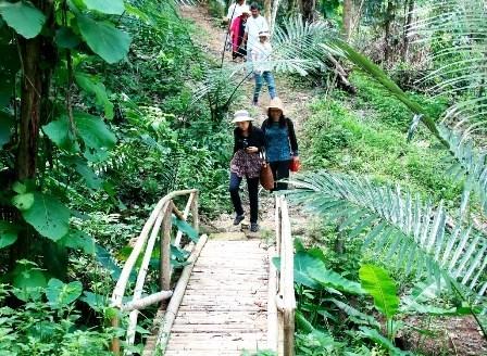 Provincia vietnamita impulsa ecoturismo junto con el desarrollo sostenible hinh anh 1