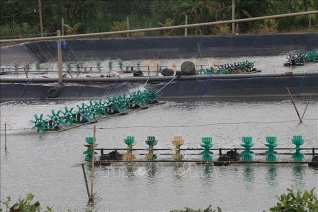 Desarrollan produccion acuicola de la provincia vietnamita de Tien Giang hinh anh 1