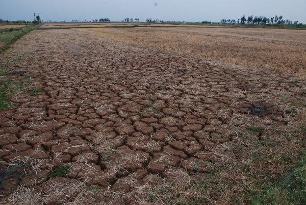 Sequia deja 50 mil hectareas de tierras incultivables hinh anh 1