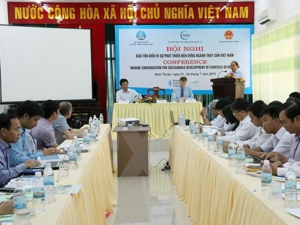 Vietnam elabora plan de accion para proteger tortugas hinh anh 1