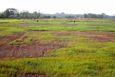 La progresiva salinizacion amenaza tierras de cultivo en Soc Trang hinh anh 1