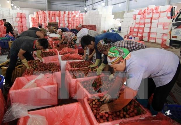El lichi vietnamita en el mercado externo hinh anh 3