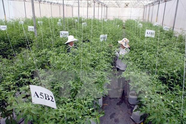 Busca Vietnam estimular inversion en agricultura hinh anh 1