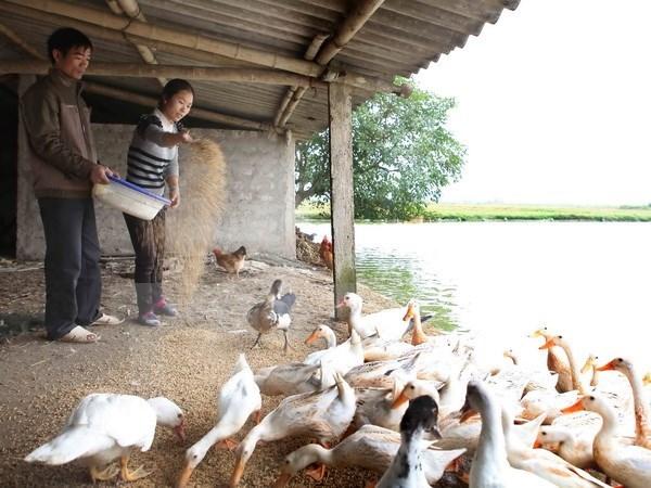 Revisan ejecucion de plan de reduccion de pobreza en Quang Ngai hinh anh 1
