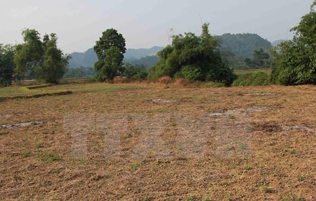 Vietnam sufrira impactos por fenomeno climatico El Nino hinh anh 1