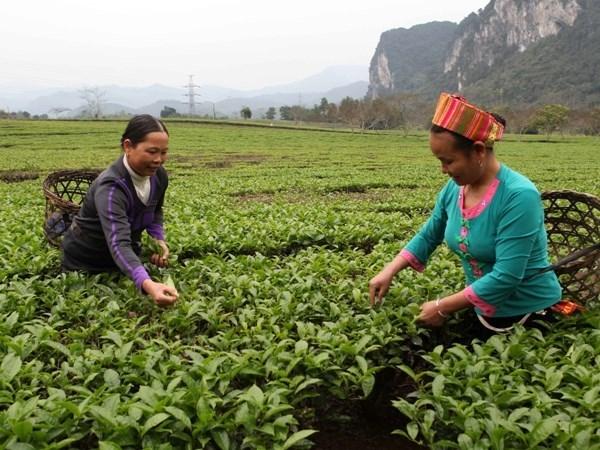 Publican informe sobre crecimiento en zonas rurales vietnamitas hinh anh 1