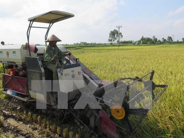 Vietnam y Japon robustecen cooperacion en agricultura hinh anh 1