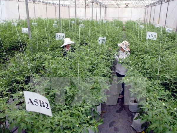 Recomiendan a empresas vietnamitas establecer plan a largo plazo hinh anh 1