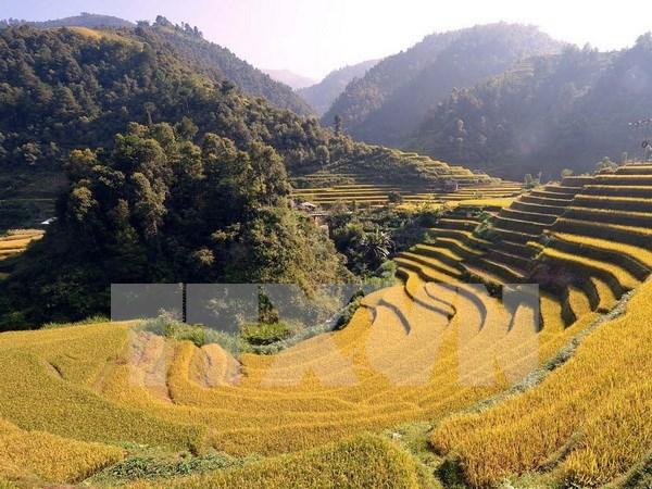 Mu Cang Chai: destino atractivo con escenas majestuosas hinh anh 1