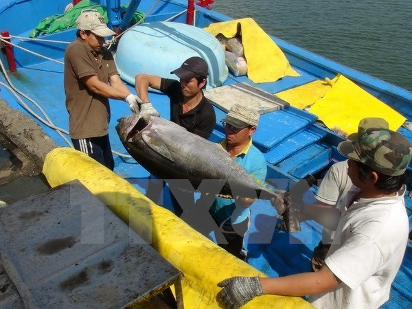 Firma nipona interesada en industria de atun oceanico vietnamita hinh anh 1