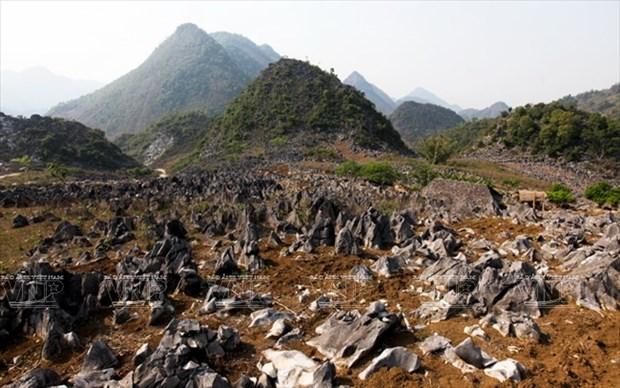 Meseta rocosa Tua Chua: belleza representativa de Dien Bien hinh anh 1