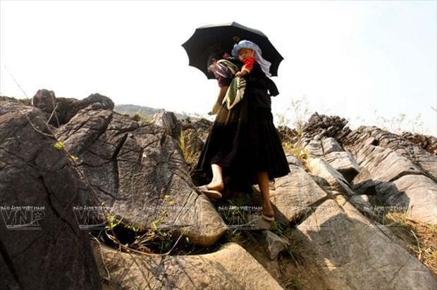 Meseta rocosa Tua Chua: belleza representativa de Dien Bien hinh anh 3