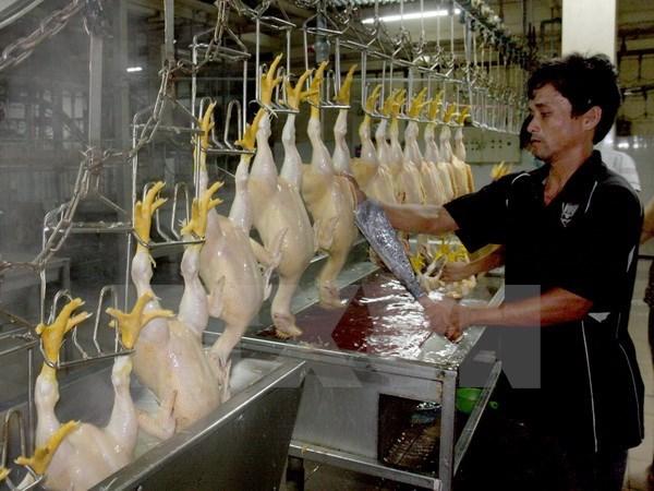Vietnam adopta medidas para elevar competitividad de ganaderia hinh anh 1