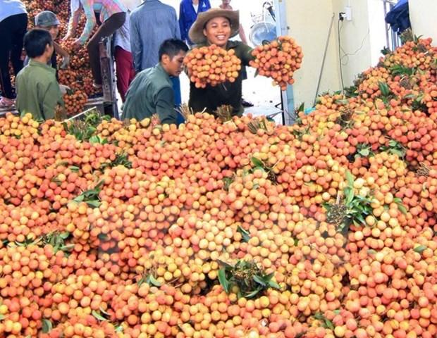 Ingreso por exportaciones de lichi de Bac Giang aumenta hinh anh 1
