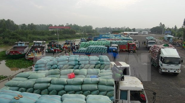 Destacado ascenso de exportacion arrocera vietnamita a Africa hinh anh 1