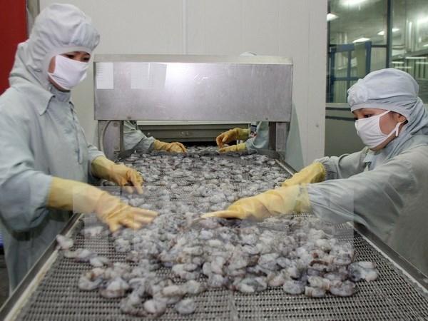 Calidad y precio competitivo, clave para camarones exportables hinh anh 1