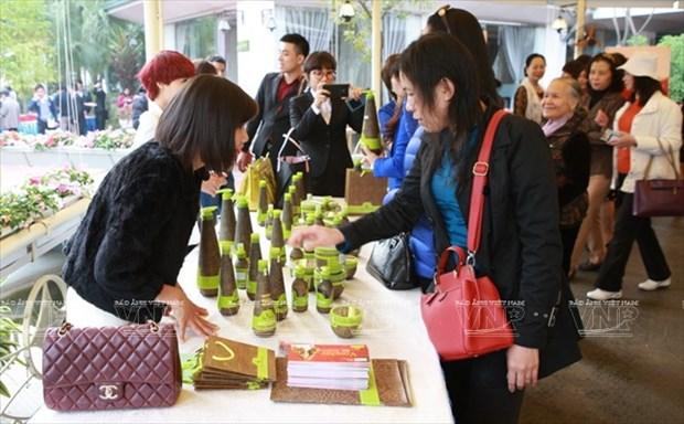 Devino cultivo de Macadamia en sector potencial de Vietnam hinh anh 11