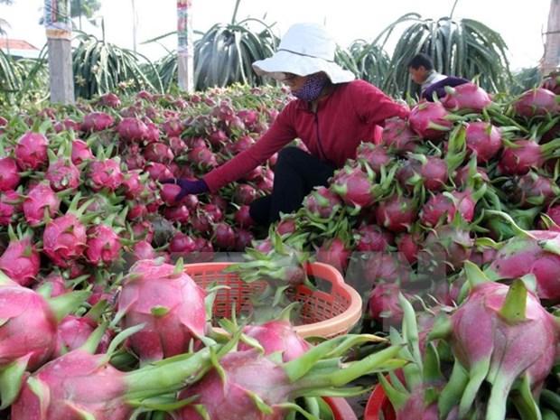 Oportunidades de exportacion agricola vietnamita a Sudcorea hinh anh 1