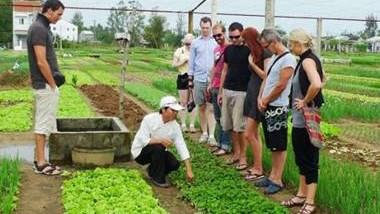 Aldea horticola Tra Que entre los destinos atractivos de Vietnam hinh anh 1