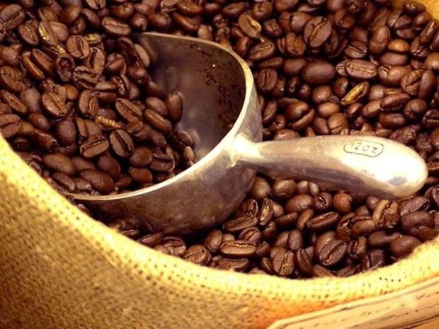 Pronostican baja productividad de cafe en cosecha 2015-2016 hinh anh 1