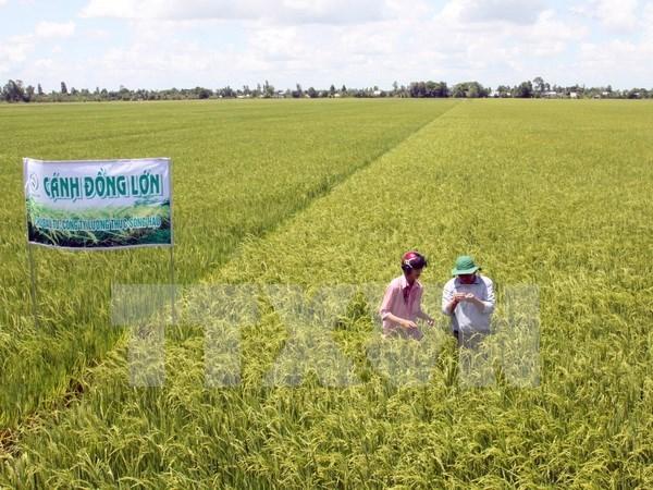 Vietnam busca promover exportaciones agricolas a China hinh anh 1
