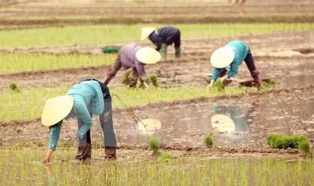 Busca subregion de Mekong reducir emision de CO2 en cultivo arrocero hinh anh 1
