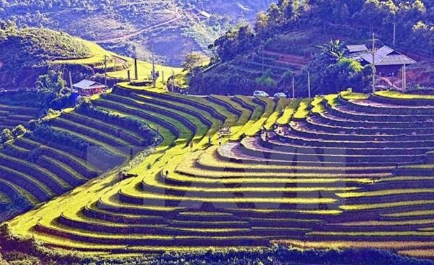 Terrazas vietnamitas entre 14 paisajes mas surrealistas del mundo hinh anh 1