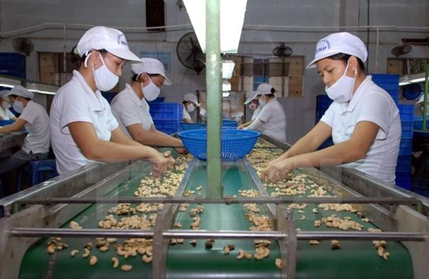 Exportacion vietnamita de anacardo registra notable incremento hinh anh 1