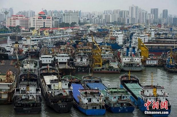 Mas de 120 pescadores filipinos desaparecidos por tifon Mujigae hinh anh 1