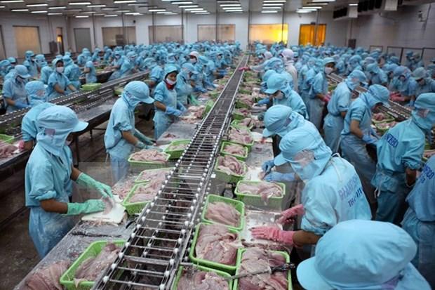 Sector del pescado Tra necesita marca fuerte hinh anh 1