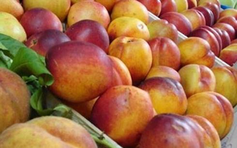 Polonia firma acuerdo para exportar manzana a Vietnam hinh anh 1
