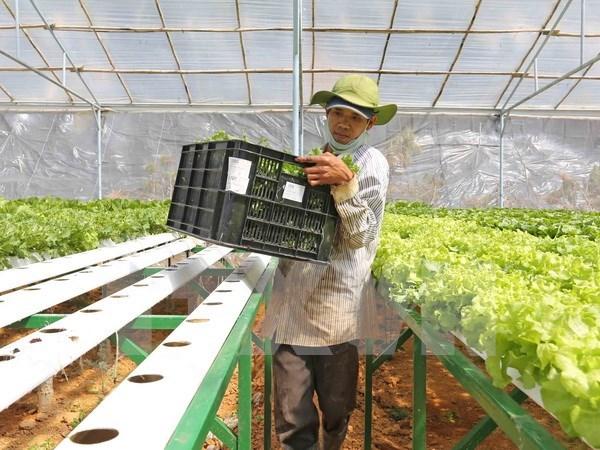 Vingroup invierte en agricultura con alta tecnologia en Quang Ninh hinh anh 1