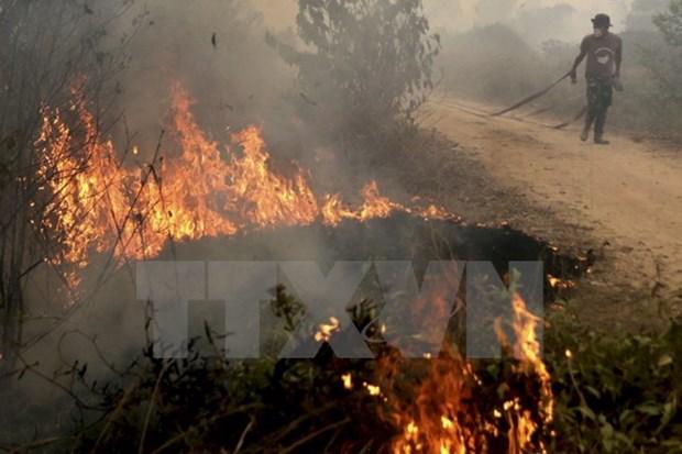 Incendios forestales en Indonesia afectan salud de miles de personas hinh anh 1