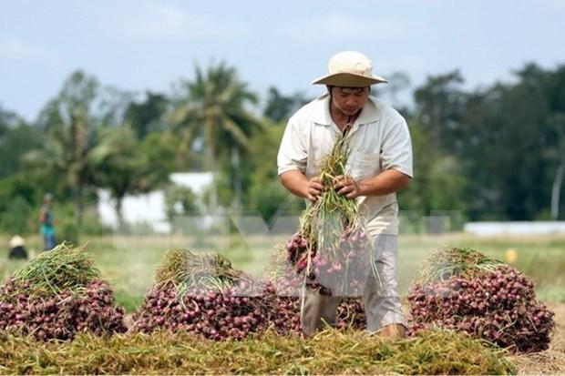 Vietnam incumplira meta para exportaciones agricolas y acuicolas hinh anh 1