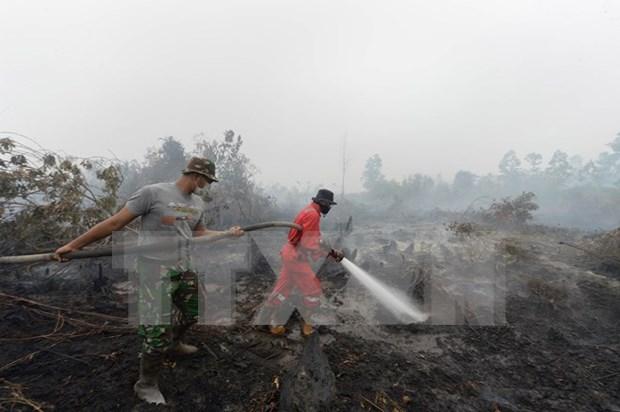 Indonesia acepta oferta de Singapur en enfrentar la neblina hinh anh 1