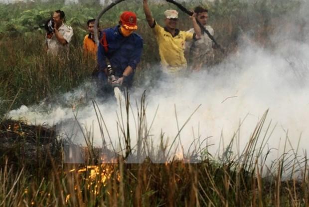 Indonesia sigue en lucha contra incendios forestales y brumas hinh anh 1