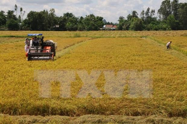 Presidente parlamentario: Agricultura a la vanguardia de Doi Moi hinh anh 1