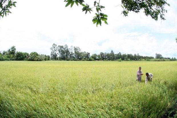 Empenado Vietnam en garantizar seguridad alimentaria hinh anh 1