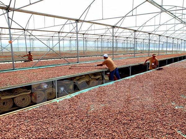 Vietnam y Japon cooperan en produccion de chocolate hinh anh 1