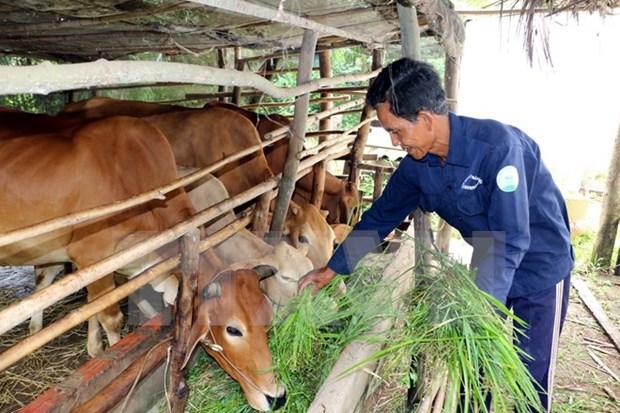 Vietnam empenado en la reduccion sostenible de la pobreza hinh anh 1
