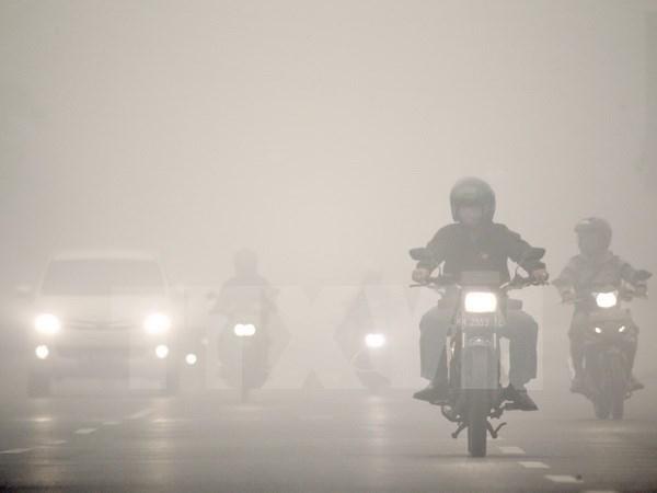 Divulga Indonesia nombre de involucrados a incendios forestales hinh anh 1