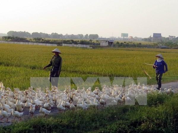 Detectan brote de gripe aviar A/H5N6 en Nam Dinh hinh anh 1