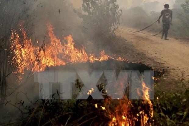Emisiones por incendios en Indonesia superan a las de EE.UU hinh anh 1