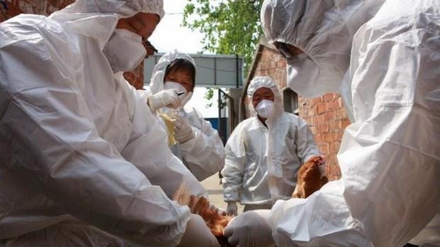Vietnam acelera prevencion contra gripe aviar A (H7N9) hinh anh 1
