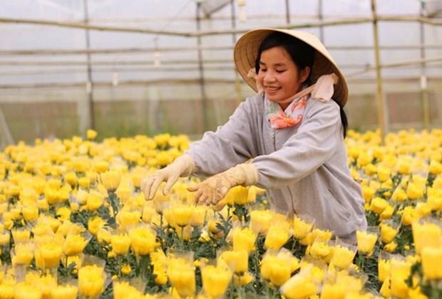 Ciudad Ho Chi Minh promueve cooperacion agricola con Holanda hinh anh 1