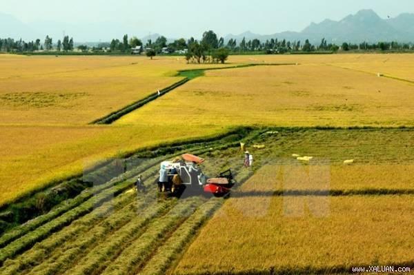 Aspira grupo japones invertir en maquinarias agricolas de Vietnam hinh anh 1