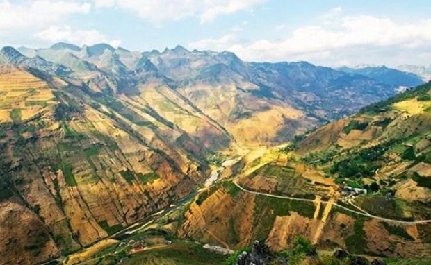 """""""Paraiso de flores de alforfon"""" en Vietnam ve alud de turistas hinh anh 4"""