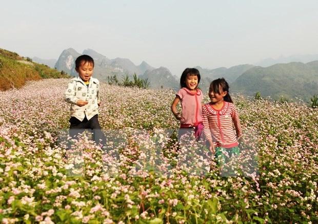 """""""Paraiso de flores de alforfon"""" en Vietnam ve alud de turistas hinh anh 1"""