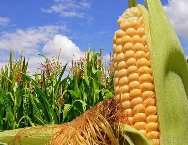 Primera granja de Vietnam recibe certificacion organica internacional hinh anh 1